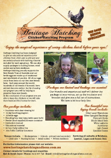 Chicken Hatching Program, Queensland Australia