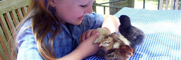 School, childcare, kindergarten hatching program Australia Queensland